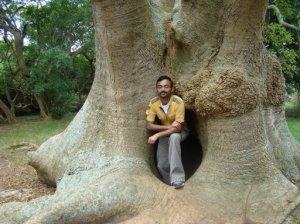 Near Ombu Tree